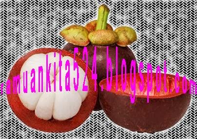 hitam buah manggis biar hitam tapi bagus Obat Herbal Pencegah Kanker