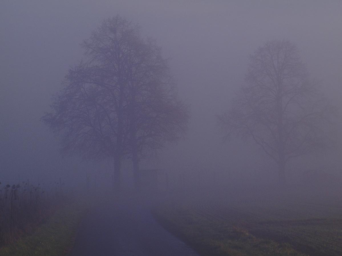 #259 Color-Minotar f2.8 35mm – Bäume im Nebel