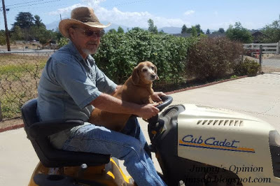 Side view of Jimmy driving Cub Cadet tractor with his fourteen year old Dachshund sitting up with paws on the steering wheel
