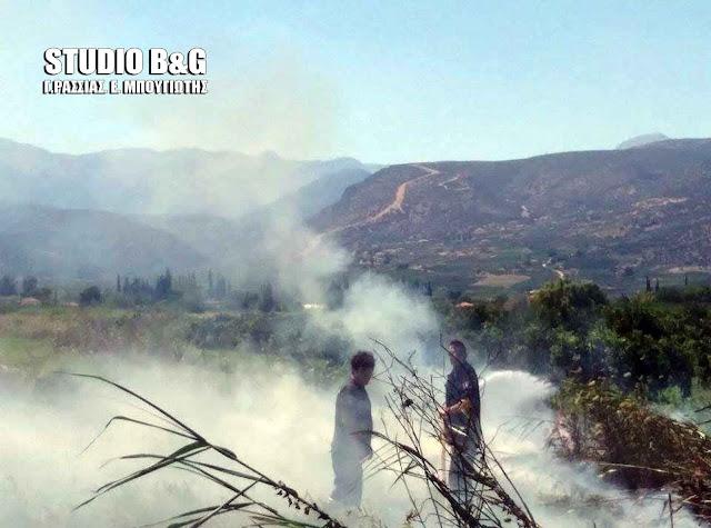 Πυρκαγιά στην περιοχή της Αγίας Άννας στη Νέα Κίο