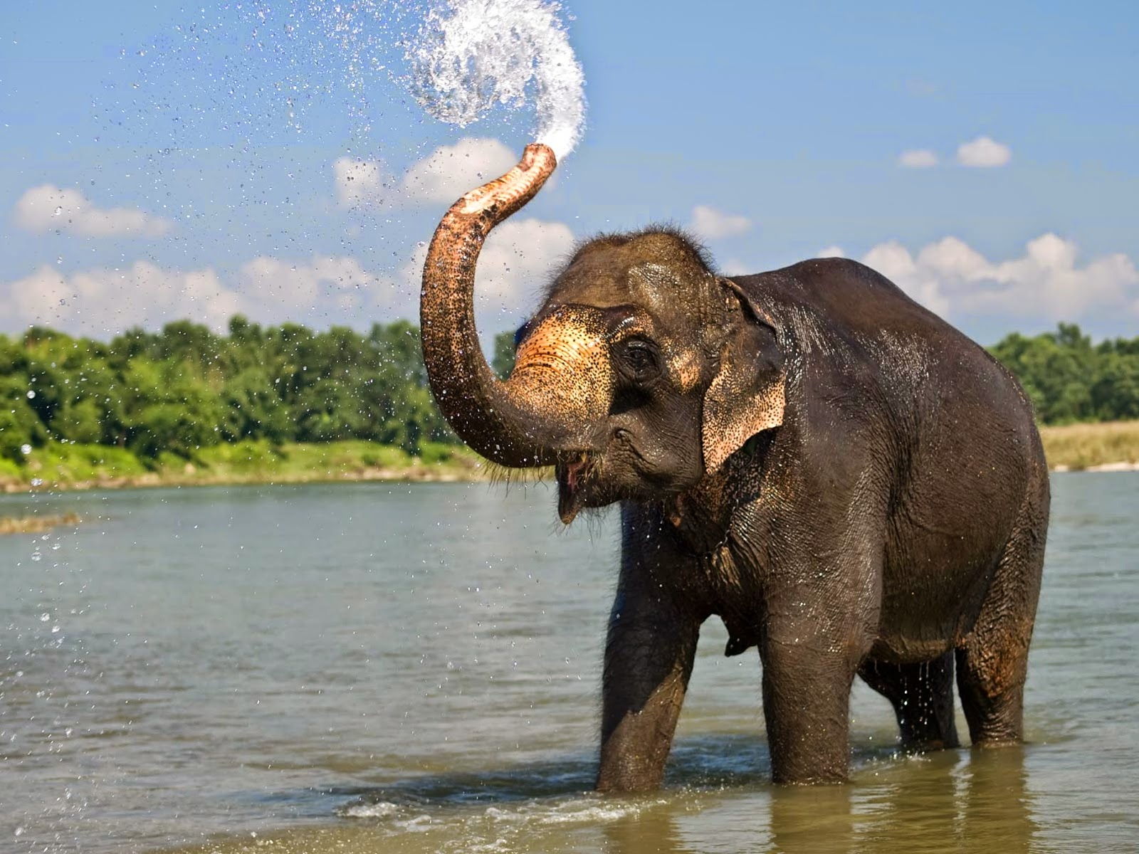 Beautiful Elephant Images HD Wallpaper
