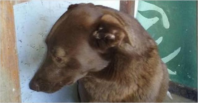 Два года собака не видела своего хозяина, а теперь он нашел ее!
