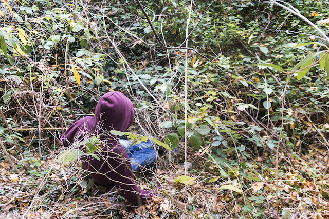 Tubs searching the brambles