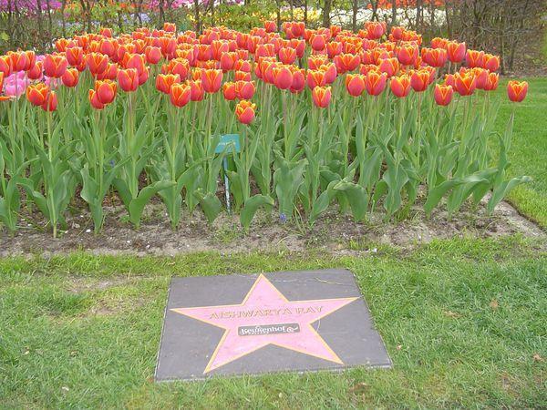 Image result for aishwarya rai Dutch Tulip