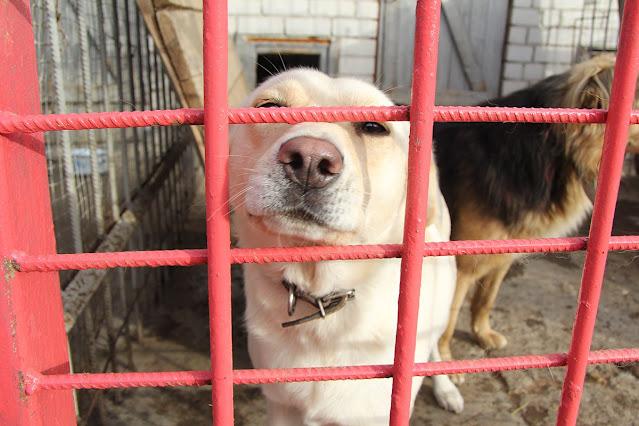 """Животных калечат в """"приютах"""" ради сбора денег на лечение"""