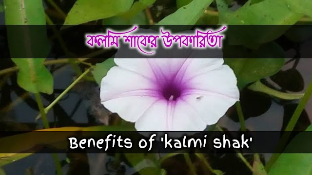 কলম্বী(কলমী) এর বনৌষধি গুনাগুন ও উপকারিতা- Herbal properties and benefits of 'kalambi' (kalami)