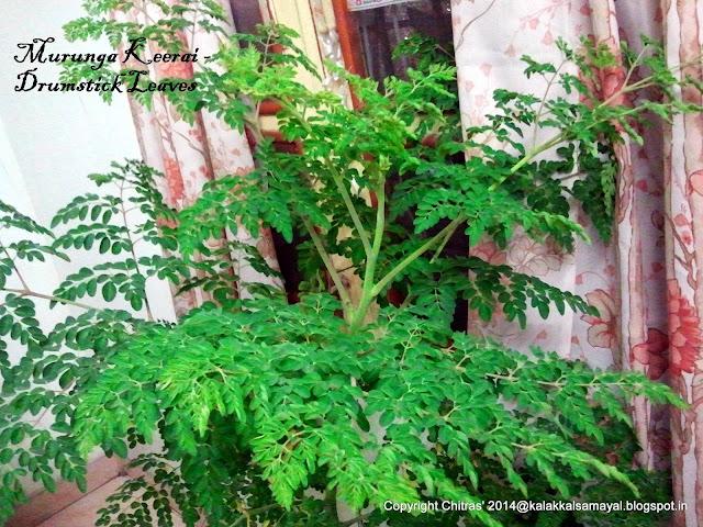 Murungaikeerai [ moringa leaf ]
