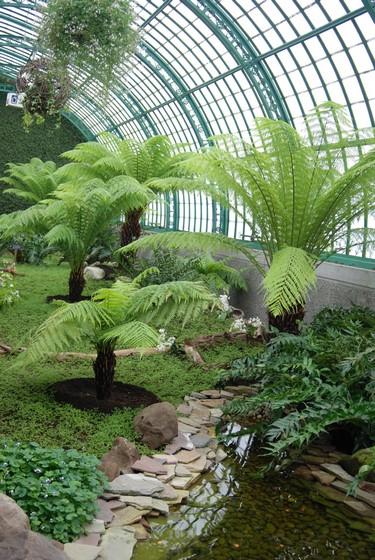 Helechos arborescentes. Loggia. Una de las salas en Los Invernaderos Reales de Laeken