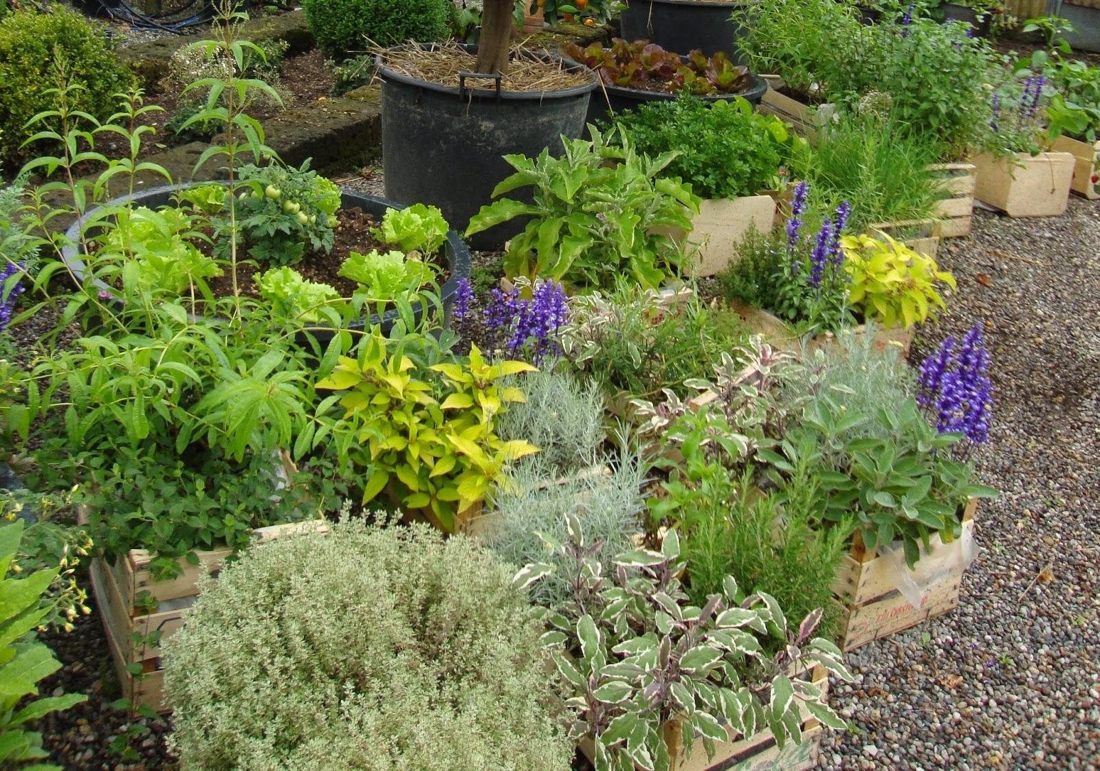 Un piccolo giardino in citt per la festa dei nonni for Giardini da arredare