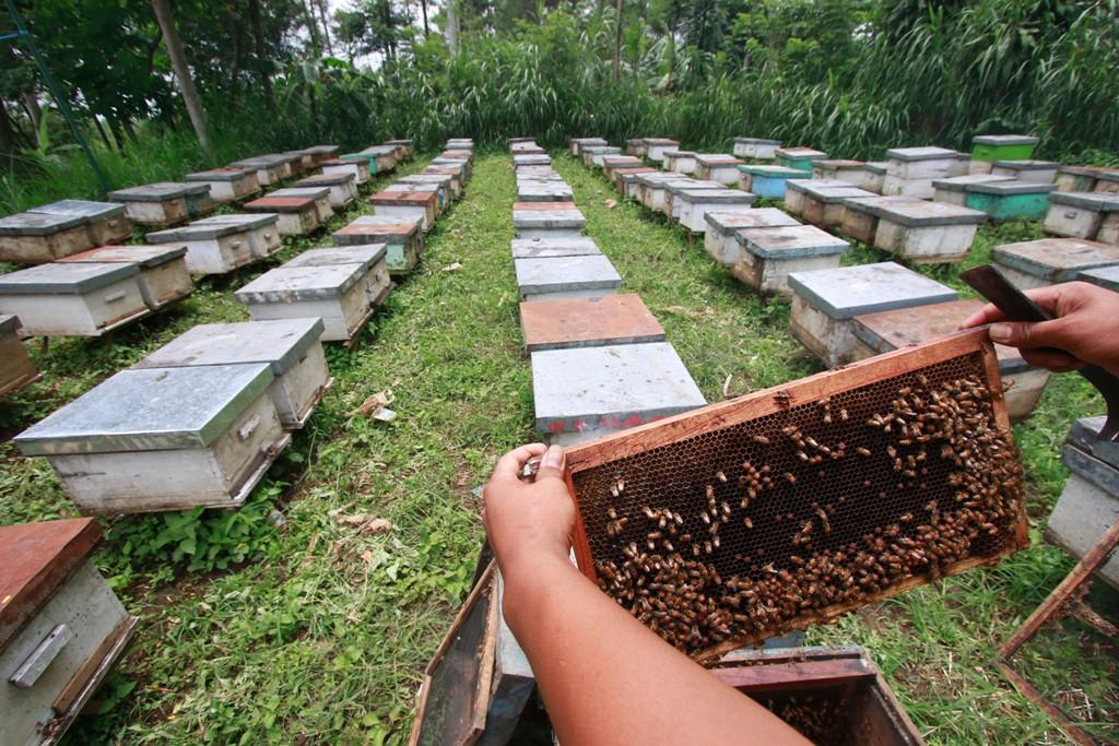 Sarang madu diWisata Petik Madu Lawang