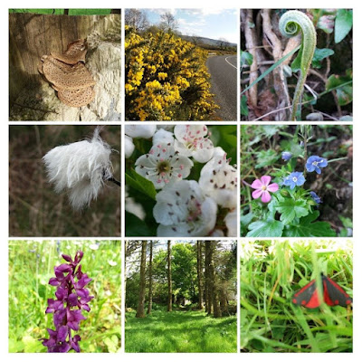 Collage of flora and fauna pictures Leitrim