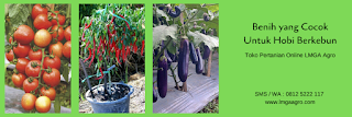 berkebun, usaha sampingan, usaha di rumah, usaha kecil, jual benih sayuran, toko pertanian, lmga agro