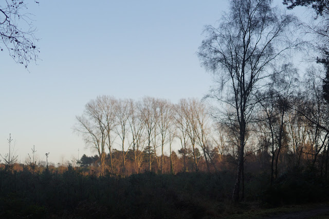 Winter woodland in Norfolk