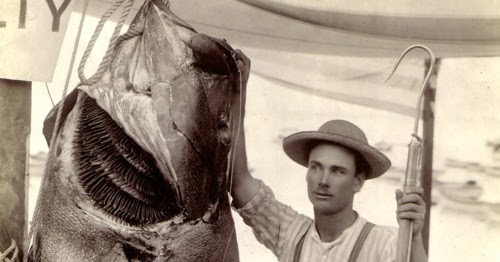 Big Fishes Of The World Bass Giant Sea Stereolepis Gigas