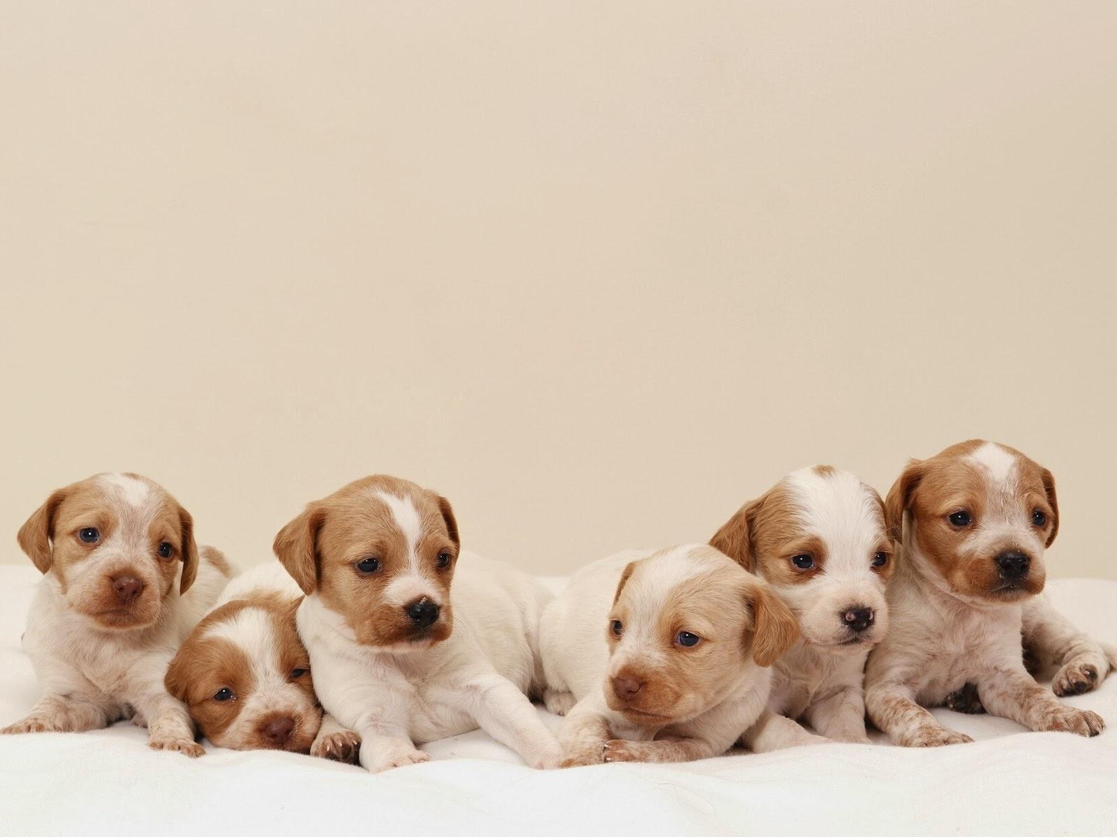 fotos de perritos - photo #6