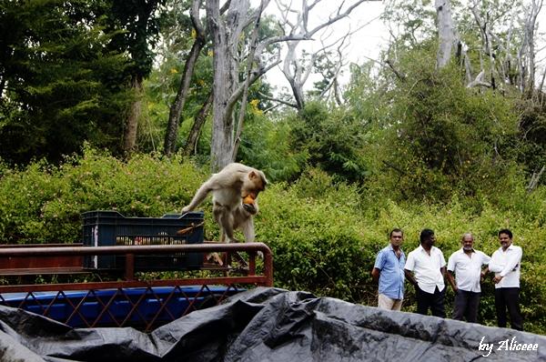 vacanta-India-maimute