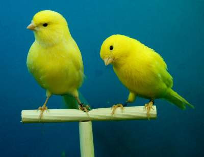 Pet Birds That are actually Quiet