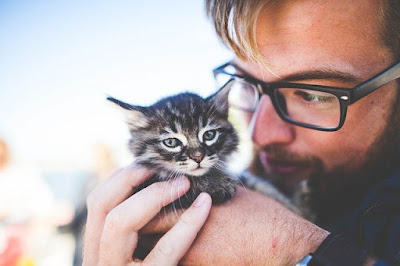 Cara merawat kucing dan mengajaknya bermain