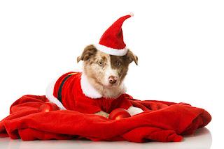 Köpek Resimlerinden sevimli köpek resimleri, komik köpek resimleri, şirin köpek resimleri, küçük köpek, tatlı köpek, yavru köpek, köpek cinsleri, en tatlı köpek resimleri benzeri konulardaki en güzel köpek resimleri ni sizler için derledik, birbirinden güzel köpek resimlerine