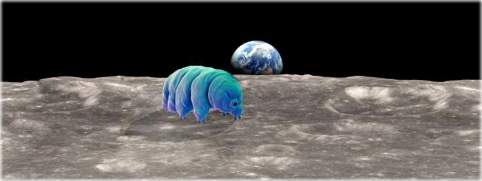 milhares de tardigrados na Lua