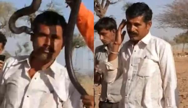 Pelancong maut gara-gara bergambar dengan ular kobra (Video)