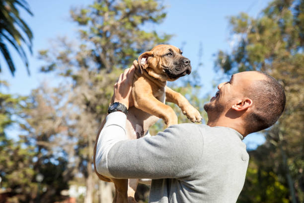 Raising a Puppy - 3 Important Things to Remember