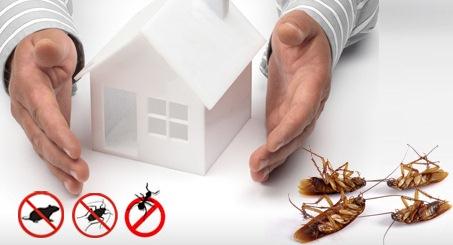 شركة المملكة  Pest-control%2B%25281%2529