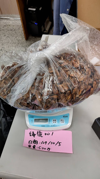 彰化縣府1公斤1千元收購荔枝椿象 想賺外快手腳要快