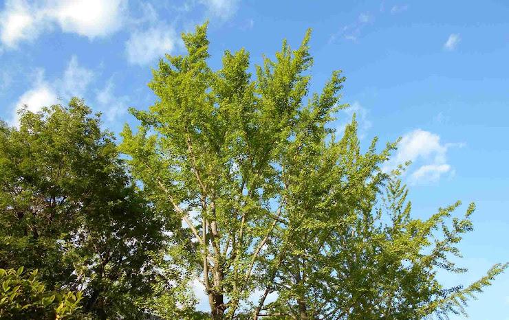 空に映える新緑を湛える樹木