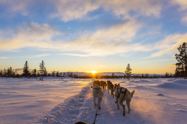 Dog sledding in Iceland at sunset