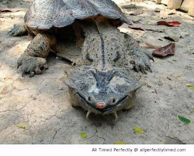 Jeziva kornjača, čudovište iz mora.