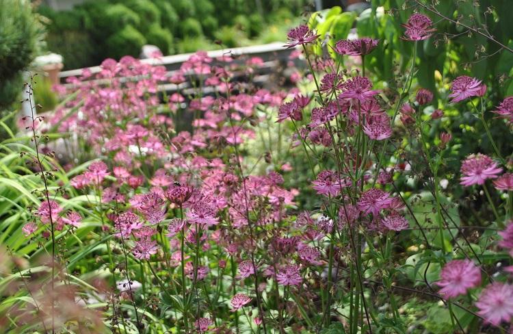 Gartengestaltung Pflanzenwahl