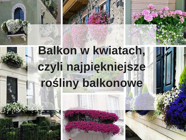 Orzeszkowe Pole Balkon W Kwiatach