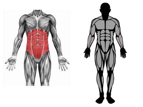 العضلات المستهدفة في تمرين البلانك