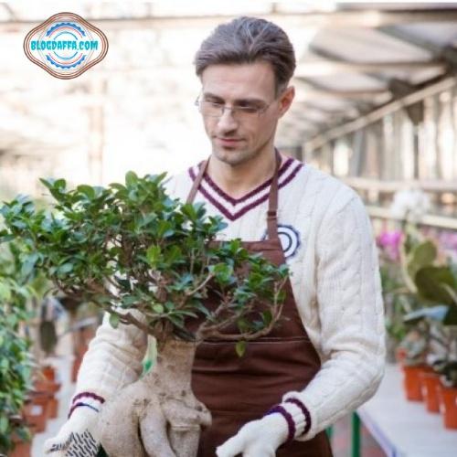 Manfaat merawat bonsai kimeng