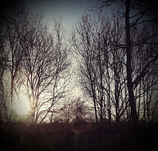 Winter leafless trees