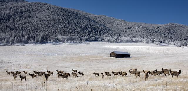 Ken Papaleo X Marks The Shot Elk Meadow Park Evergreen