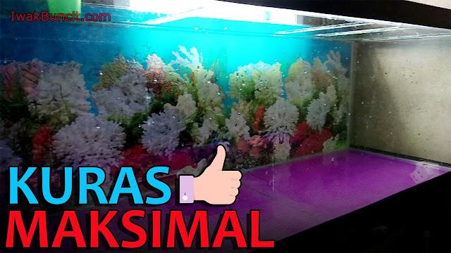 3 Tahap Efektif Menguras Total Aquarium Ikan Hias yang Perlu Kamu Ketahui: Bersih Maksimal