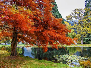 An orange tree beside a lake with green trees on the opposite shore.