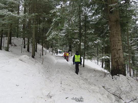 Las na Zbójeckiej Górze.