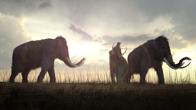 Lack of water likely caused extinction of isolated Alaska mammoths
