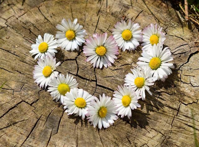Belo coração, representando flores e sentimentos