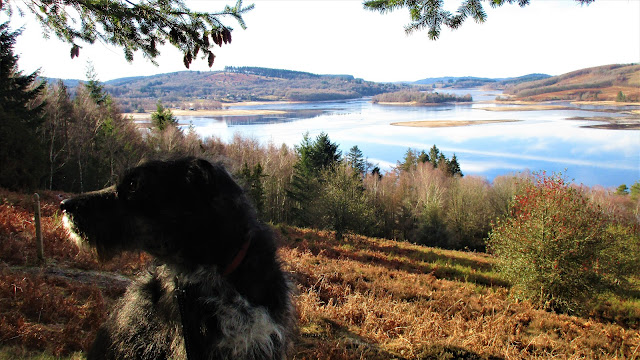 gary le chien, de tout coeur limousin, rescue dog, Lac de Vassiviere, Limousin, walking, hiking, January, retreat, visit france, creative, well being, singing holiday, singing retreat, massif central, millevaches,meditation, learning holidays, france holidays, affordable holidays, best retreats,