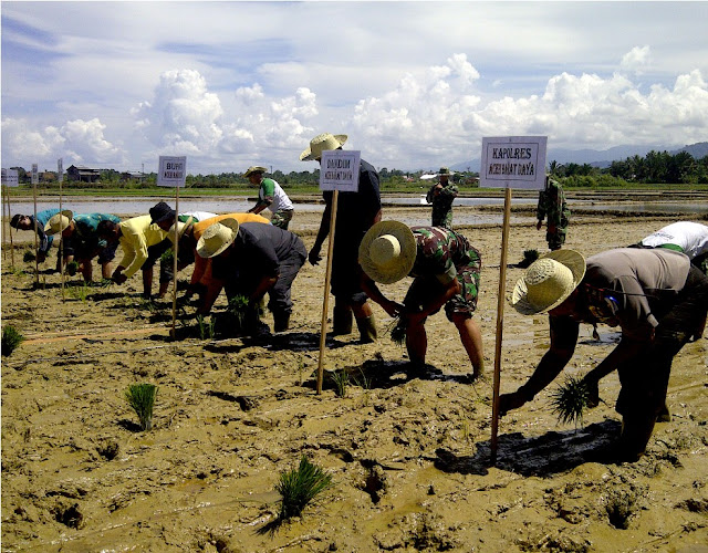 Pasca Lebaran, Petani di Abdya Mulai Tanam Serentak