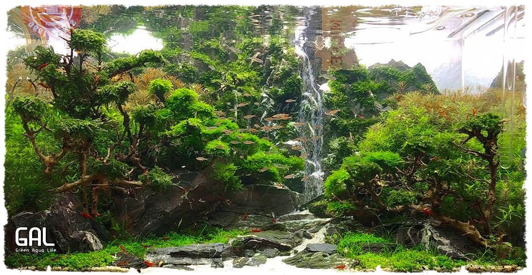 Hồ thủy sinh suối thác của tác giả Green Aqua Life