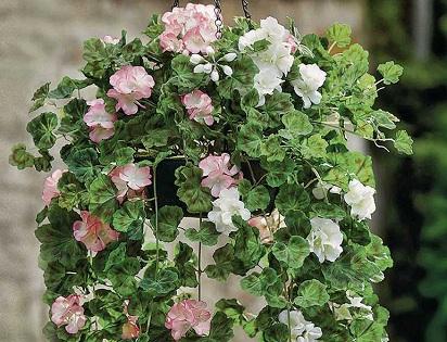 Bunga Gantung Tahan Panas Sebagai Penghiasan Rumah