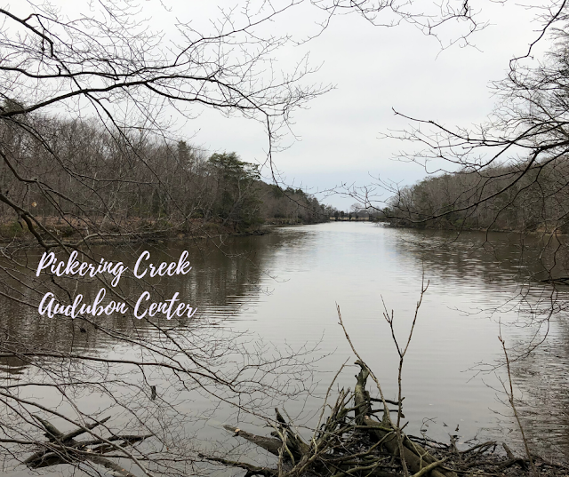 Meandering Through Pickering Creek Audubon Center in Maryland
