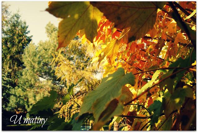 Orzech i jabłuszko, jesień w ogrodzie...