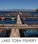 lake-toba-fish-farm