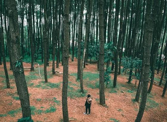 wisata hits hutan pinus pengger bantul